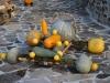 jesenne-plody-2009-6